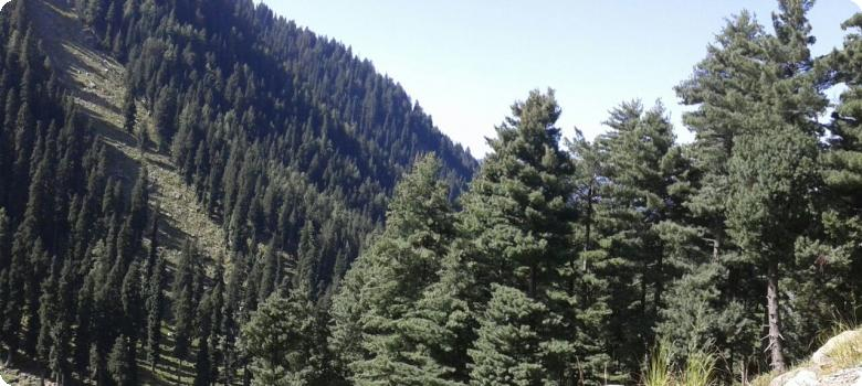 Jammu and Kashmir conifer covered mountains