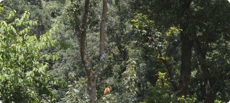 Narrow animal trail inside deep jungle at Garu