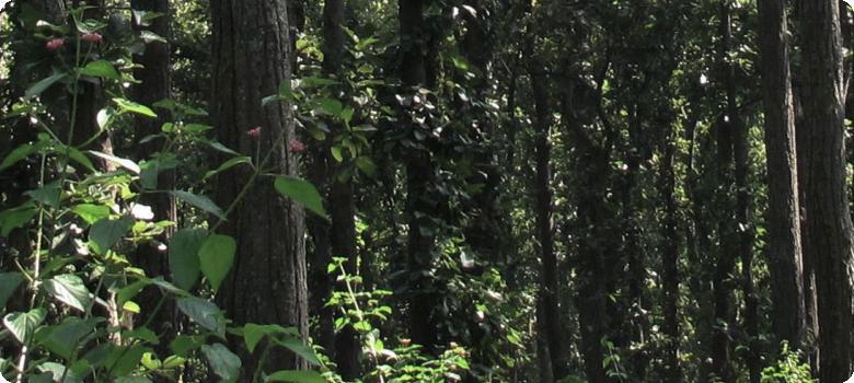 In the heart of the dense darkening jungle Garu