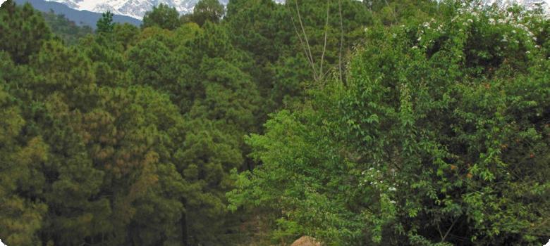 Gorgeous Dhauladhar range Dharamshala