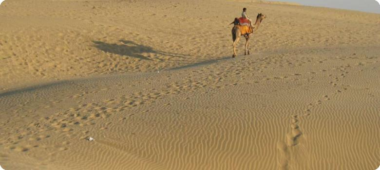 Lone camel and its shadow on desert sands, Jaisalmer