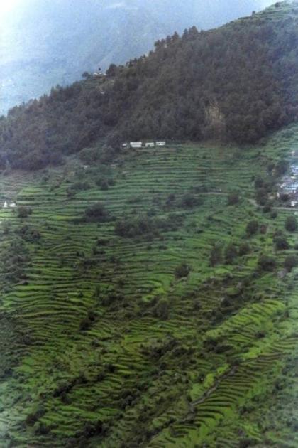 Terrace farming near Sirkha camp