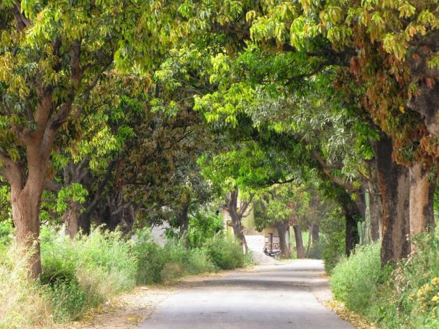 Mango avenue
