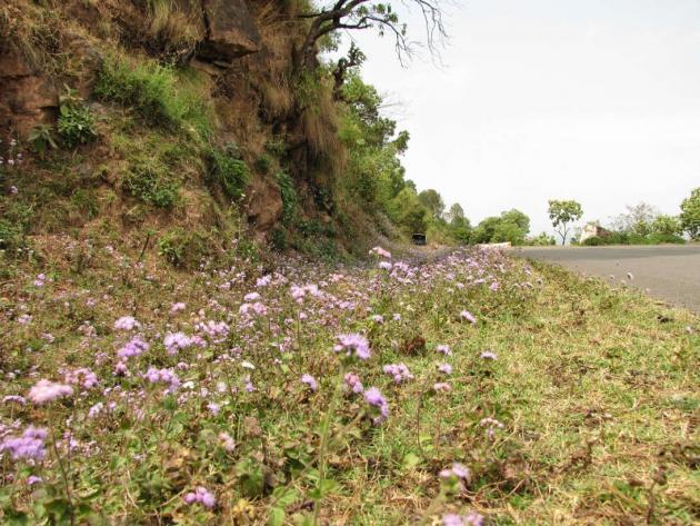 Wayside flower bed