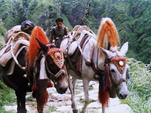 On the way to Pangu camp
