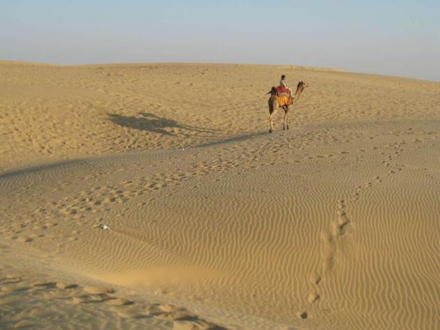 Lone camel and its shadow on desert sands