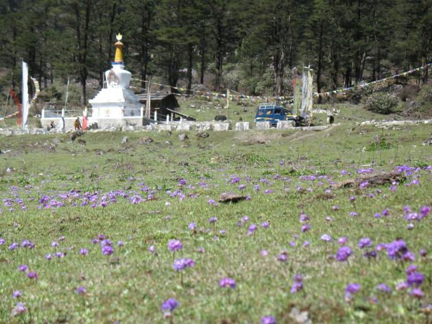 Yumthang Chorten with primulas in the foreground