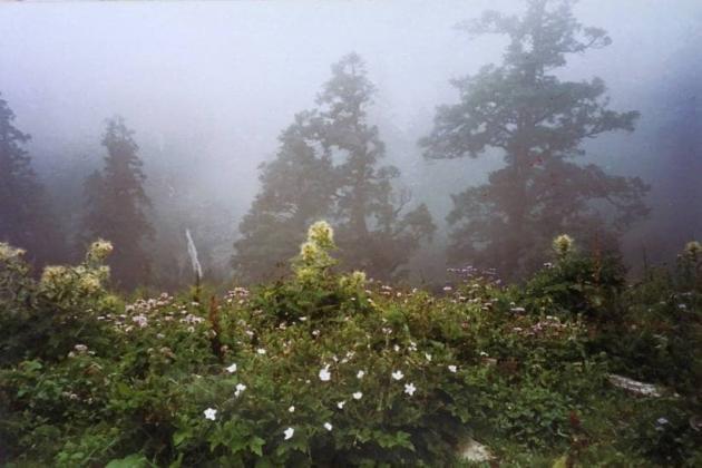 Foggy Chhiyalekh pass