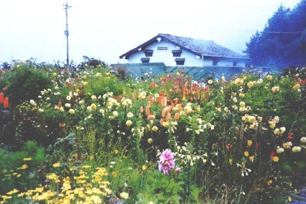 One side of flower garden Narayan Ashram