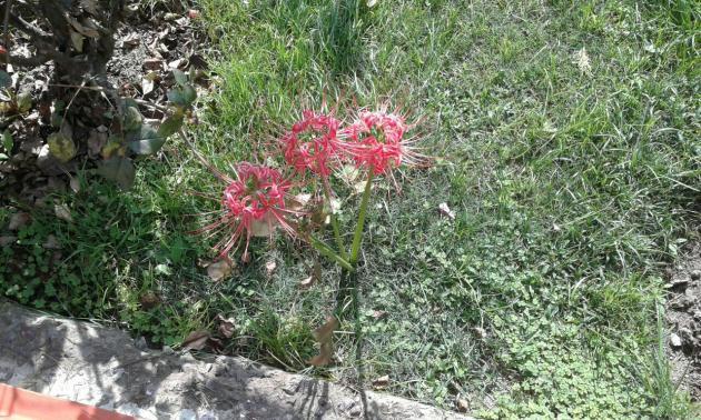 Flowers, Patnitop hotel garden