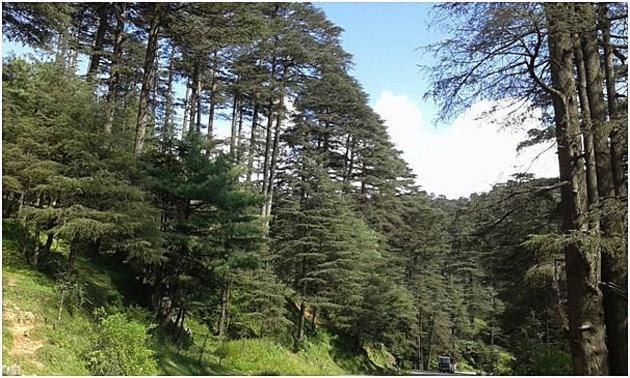Wish to walk among the trees Patnitop